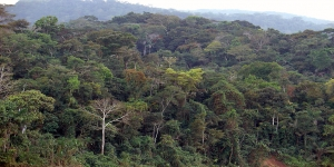 Amazon Rainforest